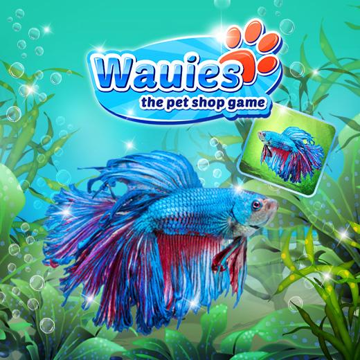 Wauies wird k mpferisch blog for Kampffisch shop