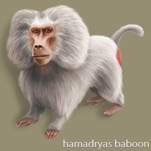 MFZ_baboon_FB