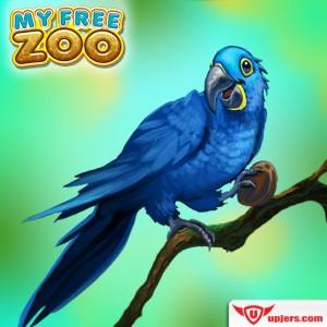 fb_mfz_hyacinth_macaw