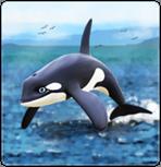 Schwertwal