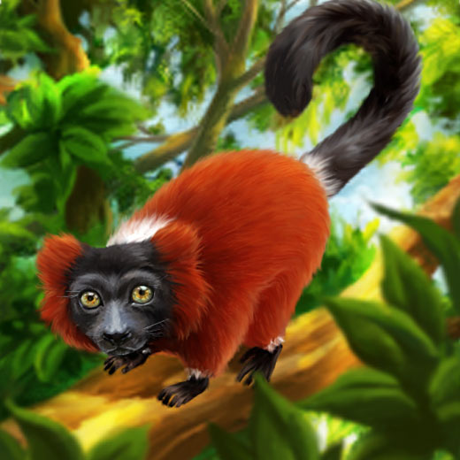 red_lemur