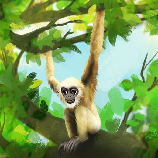 gibbon_520