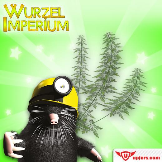 fb_wurzelimperium_colakraut_kraeutergarten_event_520_520