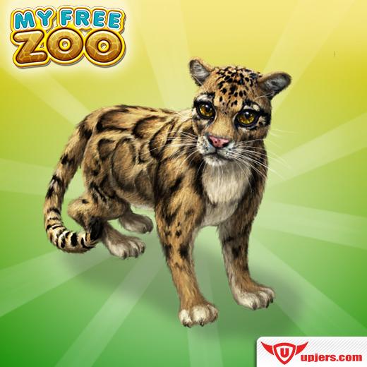 fb_mfz_clouded_leopard