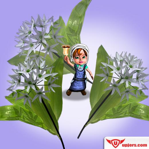 fb_mhe_her_garden_wild_garlic