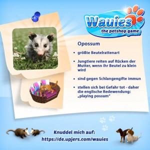 Wauies_520_520_Opossum