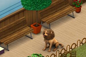 Der Löwenhund