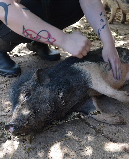 Schweinchen Update