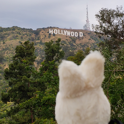 Uppy in den USA: Los Angeles (2/4)