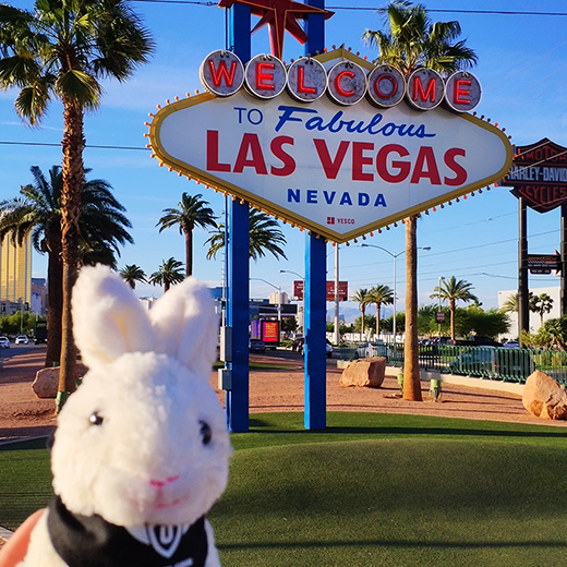 Uppy in den USA: Las Vegas (1/5)